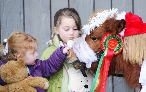 Christmas Fair and Foal Show