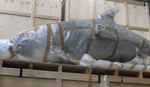 A bubble-wrapped dolphin in the National Museums Collection Centre