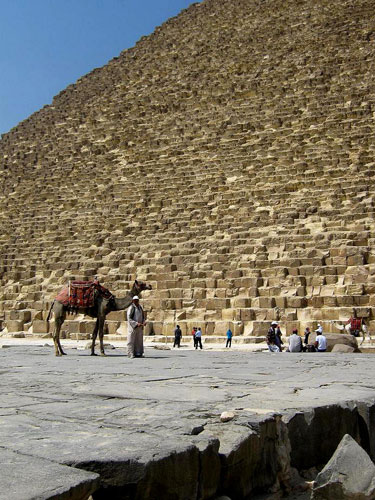 Camel at the foot of the Great Pyramid at Giza