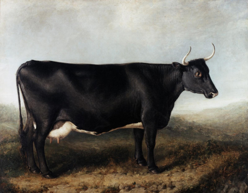 Fife Cow, 1833-38 , 6 years old, property of Mr B. Ferney of Kilmux, bred by Mr Anderson, Kinglassie.