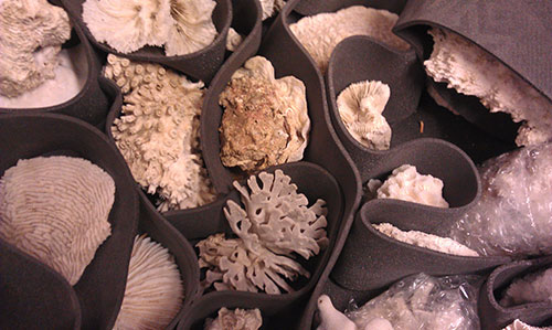Coral specimens in the National Museums Collection Centre