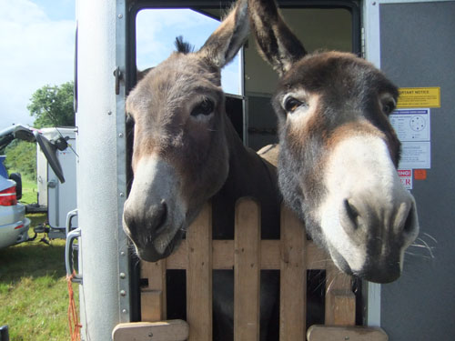 Donkeys Baxter and Jools at National Museum of Rural Life in 2012.