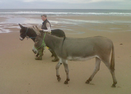 Baxter and Jools the donkeys enjoying some downtime on the beach