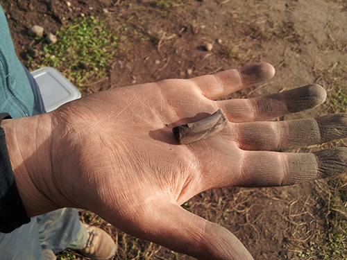 An unusual find – a decorated shale bangle fragment. Shale isn't local to the area – this must have been imported from the far side of the Moray Firth.