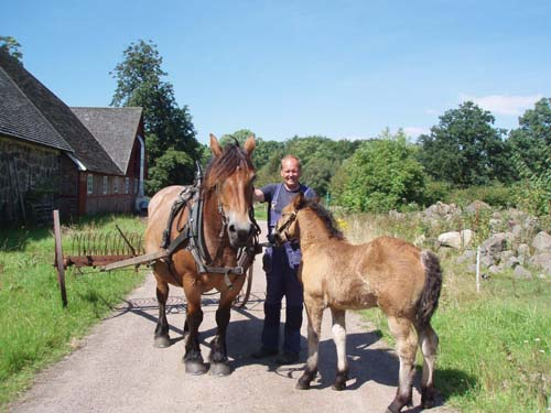 Bosse Dahlgren is an expert in animal husbandry, eco farming and biodiversity