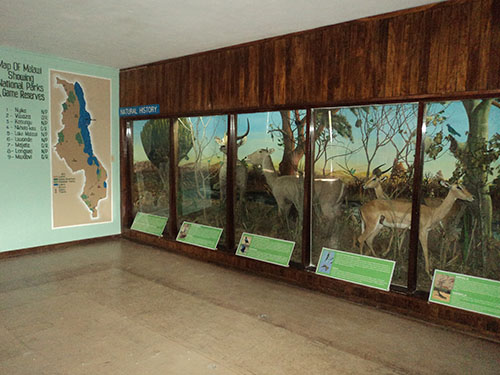 The new natural history display