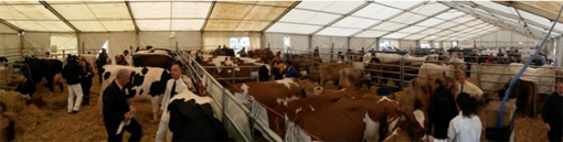 Ayr County Show held at Ayr Racecourse